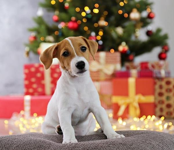 Cuento de navidad el perrito callejero